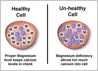 The Magnesium Calcium Balance in the Cell